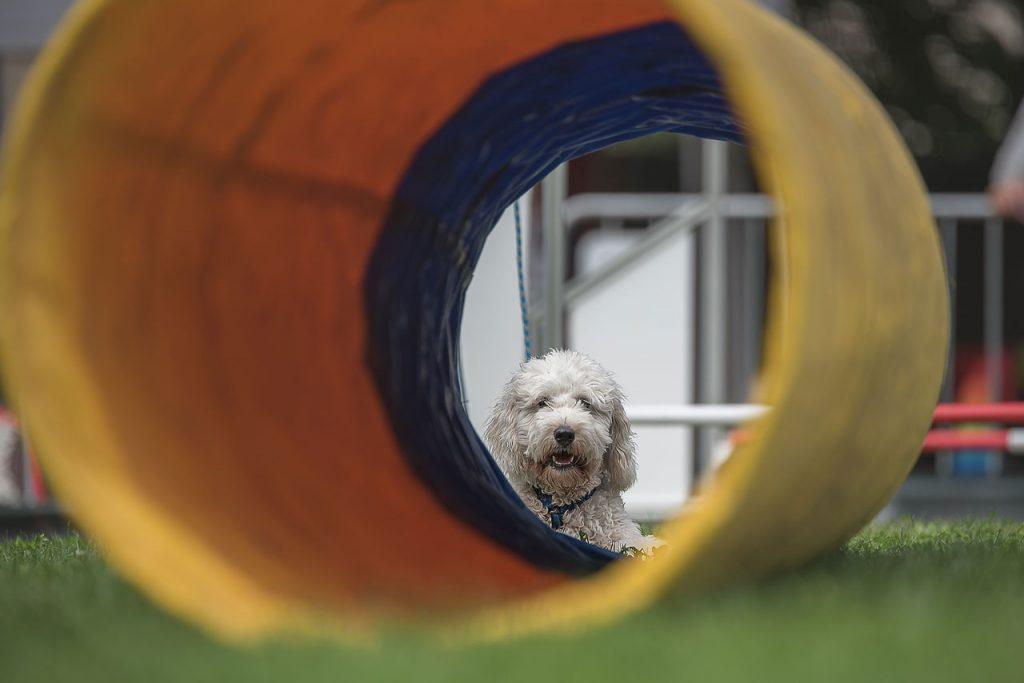agility-dog-2_1280x854