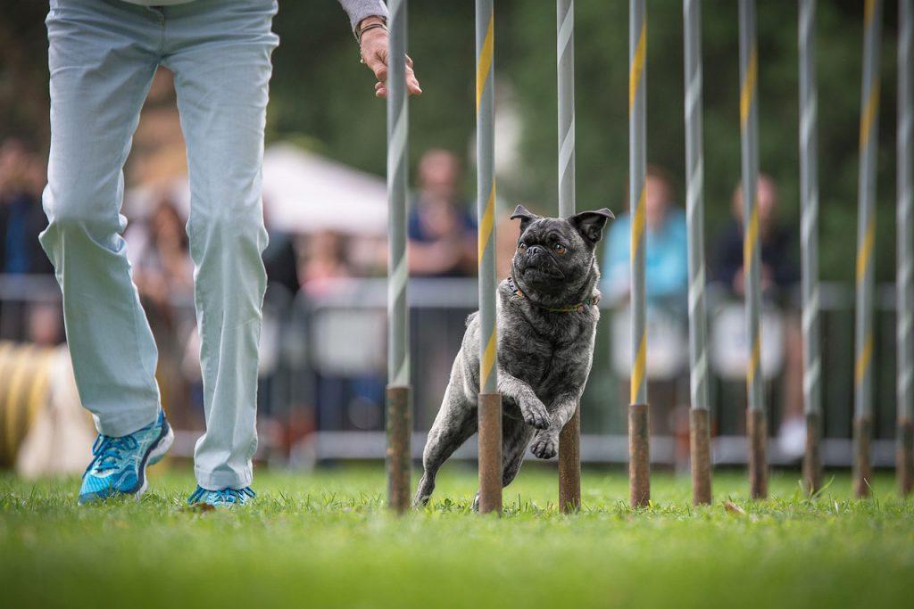 agility-dog-3_1280x854