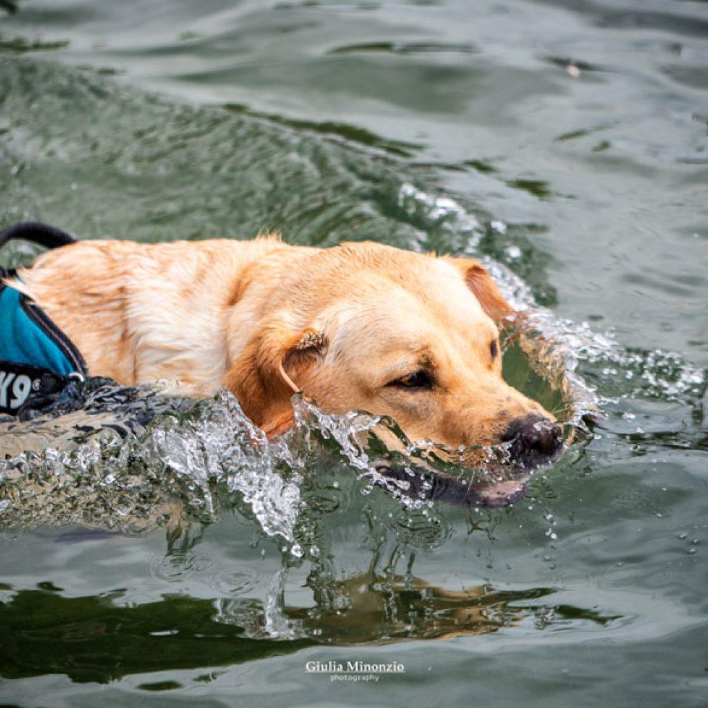 splash-dog-1_800x587