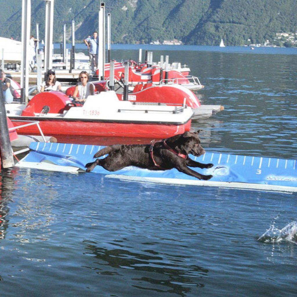 splash-dog-2_800x535
